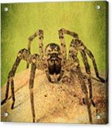 The Spider Series X Acrylic Print