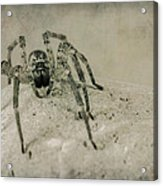 The Spider Series Xi Acrylic Print