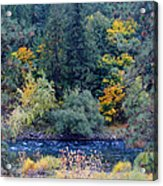 The Spokane River In The Fall Colors Acrylic Print