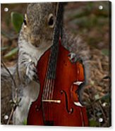 The Squirrel And His Double Bass Acrylic Print