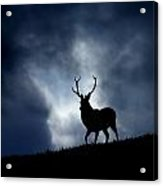 The Stag Acrylic Print