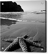 The Starfish Acrylic Print by Peter Tellone
