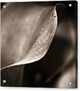 The Stately Lily Stands Fair Acrylic Print