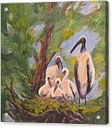The Stork Brought Them Acrylic Print