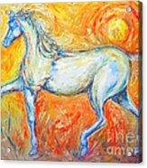 The Sun Horse Acrylic Print