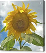 The Sun Is Out Acrylic Print
