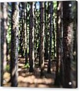 The Surreal Forest Acrylic Print