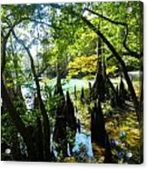 The Swamp By The Springs Acrylic Print by Julie Dant