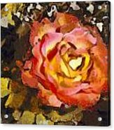 The Sweetest Rose 1 Acrylic Print