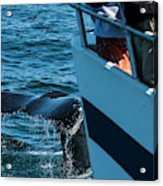 The Tail Of A Whale Right In Front Acrylic Print