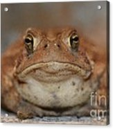 The Tennessee Toad Acrylic Print