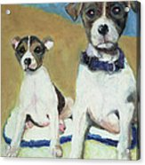 The Terriers Acrylic Print