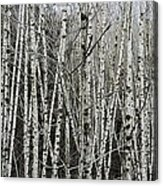 The Thicket Acrylic Print