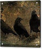 The Three Black Crows Acrylic Print