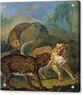 The Three Leopards Acrylic Print