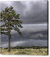 The Thunder Rolls - Storm - Pine Tree Acrylic Print by Jason Politte