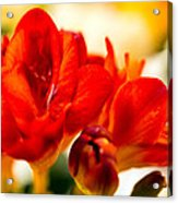 The Touch Of Red Acrylic Print