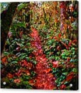 The Trail At Rainbow Falls Washington Acrylic Print