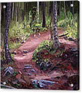The Trail Series - Sunlight In The Wood Acrylic Print