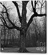 The Tree In The Park Acrylic Print