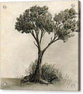 The Tree Quietly Stood Alone Acrylic Print