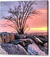 The Tree V Acrylic Print