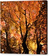 The Trees Dance As The Sun Smiles Acrylic Print