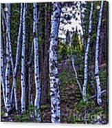 The Trees Have Eyes-d Acrylic Print