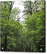 The Trees Of Illinois Acrylic Print