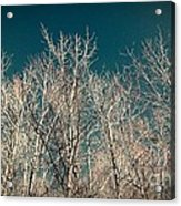 The Trees Of Teal Acrylic Print