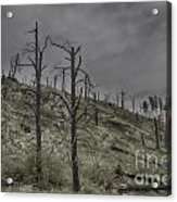 The Trees That Were Acrylic Print