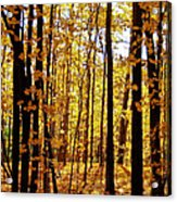 The Trees Through The Forest Acrylic Print
