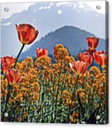 The Tulips In Bloom Acrylic Print