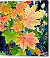 The Turning Leaves Acrylic Print