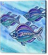 The Turquoise Rainbow Fish Acrylic Print