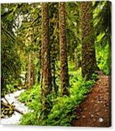 The Twisting Path Winding Through Paradise  Acrylic Print