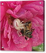 The Ugly Side Of Pink Acrylic Print
