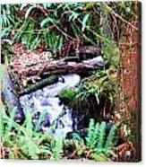 The Unknown Creek Acrylic Print