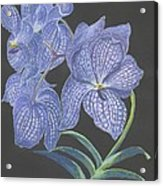 The Vanda Orchid Acrylic Print