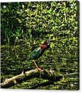 The Wader Acrylic Print
