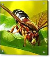 The Wasp Acrylic Print