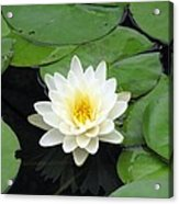 The Water Lilies Collection - 01 Acrylic Print