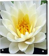 The Water Lilies Collection - 03 Acrylic Print