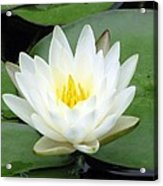 The Water Lilies Collection - 04 Acrylic Print