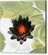 The Water Lilies Collection - Photopower 1034 Acrylic Print