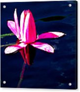 The Water Lily... Acrylic Print