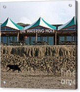 The Watering Hole Perranporth Acrylic Print