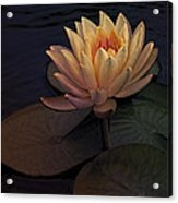 The Waterlily Acrylic Print by Jill Balsam