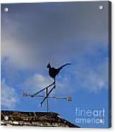 The Way The Wind Blows Acrylic Print