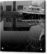 The Web Acrylic Print by Peter Skelton
